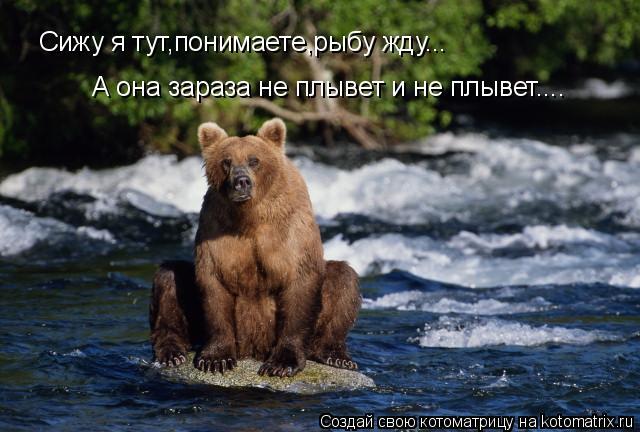 Котоматрица: Сижу я тут,понимаете,рыбу жду... А она зараза не плывет и не плывет....