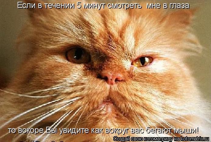 Котоматрица: Если в течении 5 минут смотреть  мне в глаза то вскоре Вы увидите как вокруг вас бегают мыши!