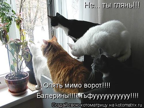 Котоматрица: Не... ты глянь!!! Опять мимо ворот!!!! Балерины!!!! Тьфууууууууууу!!!!