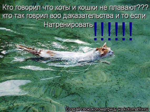 Котоматрица: Кто говорил что коты и кошки не плавают??? кто так говрил воо даказательства и то если  Натренировать !!!!!!