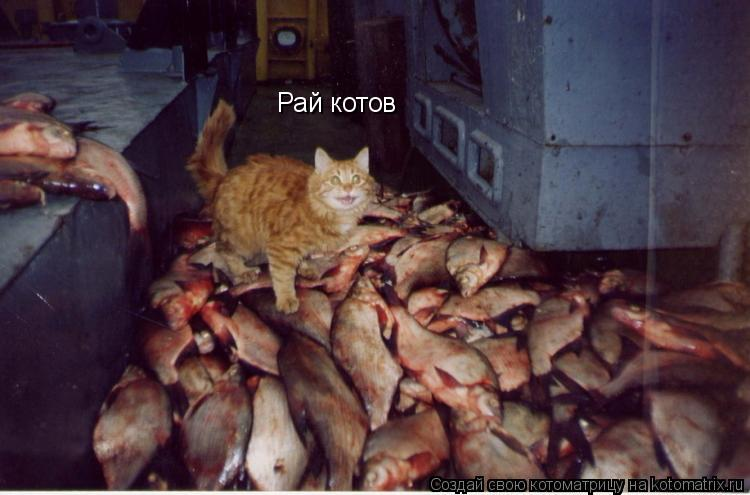 Котоматрица: Рай котов