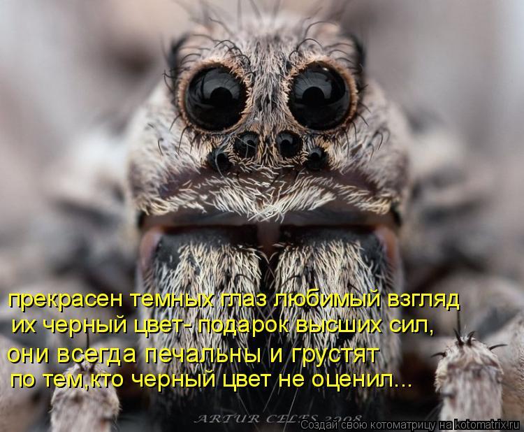 Котоматрица: по тем,кто черный цвет не оценил... они всегда печальны и грустят их черный цвет- подарок высших сил, прекрасен темных глаз любимый взгляд