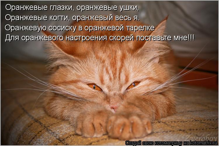 Котоматрица: Оранжевые глазки, оранжевые ушки, Оранжевые когти, оранжевый весь я. Оранжевую сосиску в оранжевой тарелке Для оранжевого настроения скоре