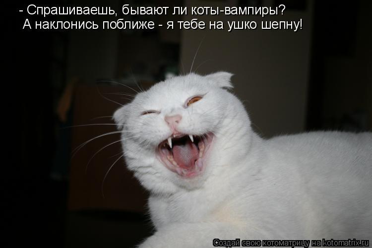 Котоматрица: - Спрашиваешь, бывают ли коты-вампиры? А наклонись поближе - я тебе на ушко шепну!