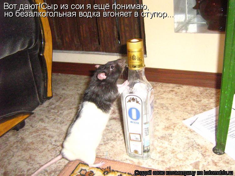 Котоматрица: Вот дают!Сыр из сои я ещё понимаю, но безалкогольная водка вгоняет в ступор...