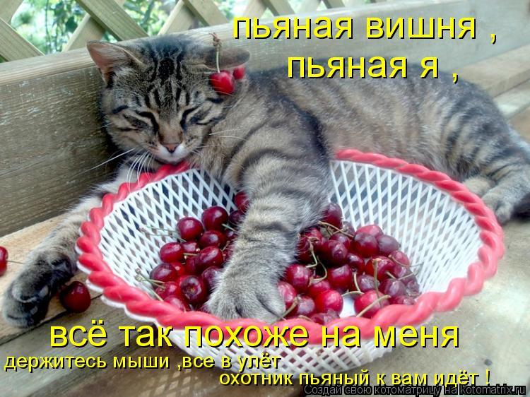 Котоматрица: пьяная вишня , пьяная я , всё так похоже на меня держитесь мыши ,все в улёт охотник пьяный к вам идёт !