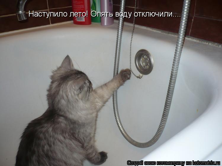 Котоматрица: Наступило лето! Опять воду отключили....