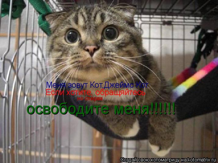 Котоматрица: Меня зовут Кот,Джеймс Кот Если хотите, обращяйтесь но сперва освободите меня!!!!!!