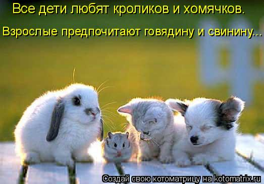 Котоматрица: Все дети любят кроликов и хомячков. Взрослые предпочитают говядину и свинину...