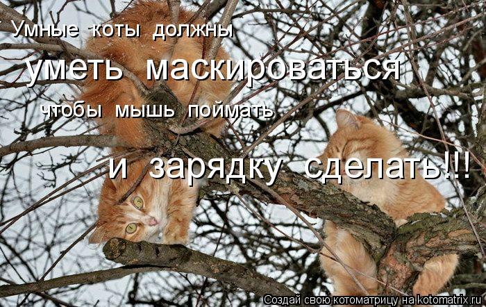 Котоматрица: Умные  коты  должны уметь  маскироваться чтобы  мышь  поймать и  зарядку  сделать!!!