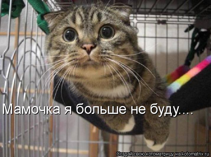 Котоматрица: Мамочка я больше не буду....