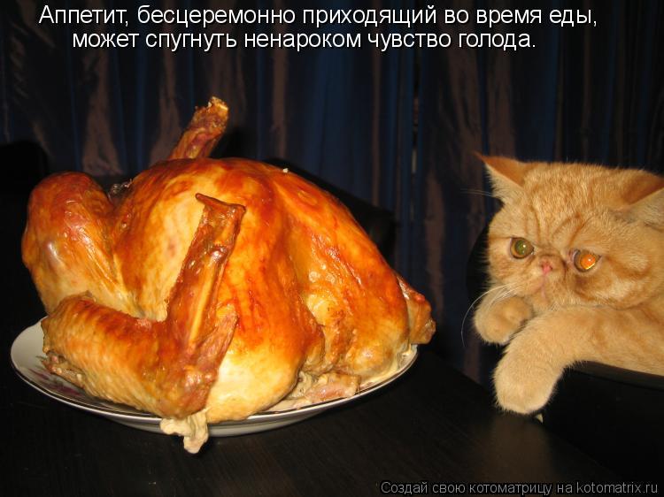 Котоматрица: Аппетит, бесцеремонно приходящий во время еды, может спугнуть ненароком чувство голода.