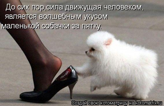 Котоматрица: До сих пор,сила движущая человеком, является волшебным укусом маленькой собачки за пятку.