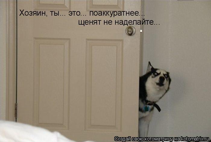 Котоматрица: Хозяин, ты... это... поаккуратнее... щенят не наделайте...