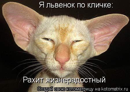 Котоматрица: Я львенок по кличке: Рахит жизнерадостный