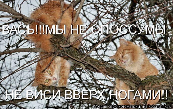 Котоматрица: ВАСЬ!!!МЫ НЕ ОПОССУМЫ НЕ ВИСИ ВВЕРХ НОГАМИ!!