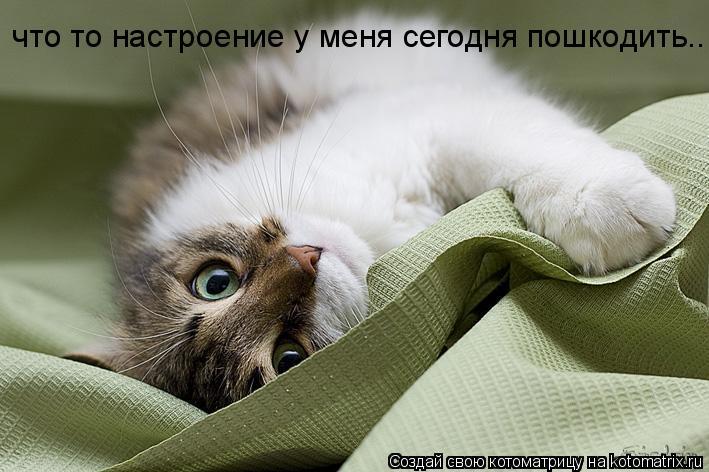 Котоматрица: что то настроение у меня сегодня пошкодить..