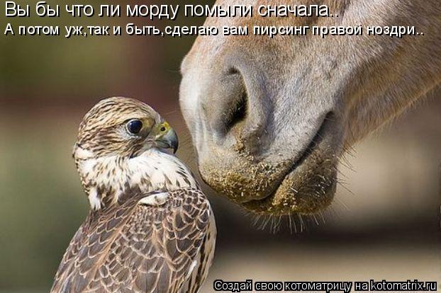 Котоматрица: Вы бы что ли морду помыли сначала.. А потом уж,так и быть,сделаю вам пирсинг правой ноздри..