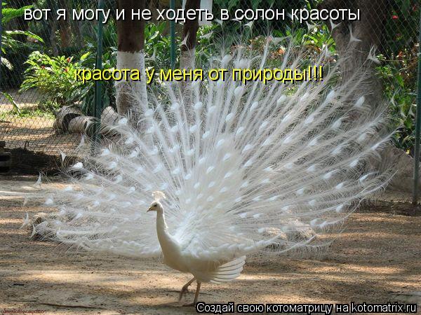 Котоматрица: вот я могу и не ходеть в солон красоты красота у меня от природы!!!