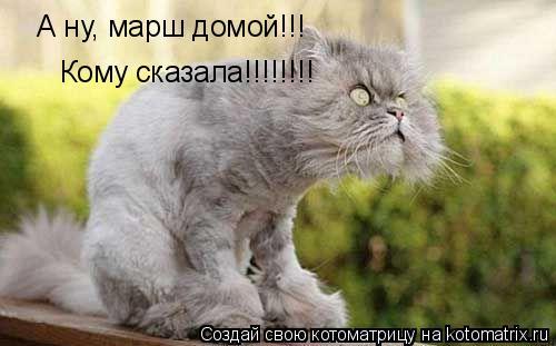 Котоматрица: А ну, марш домой!!! Кому сказала!!!!!!!!
