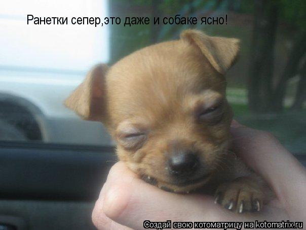 Котоматрица: Ранетки сепер,это даже и собаке ясно!