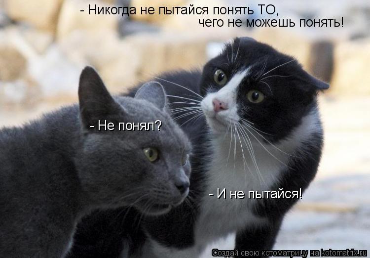 http://kotomatrix.ru/images/lolz/2009/05/28/k.jpg