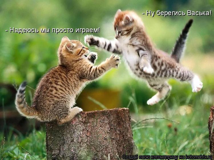 Котоматрица: - Ну берегись Васька! - Надеюсь мы просто играем!
