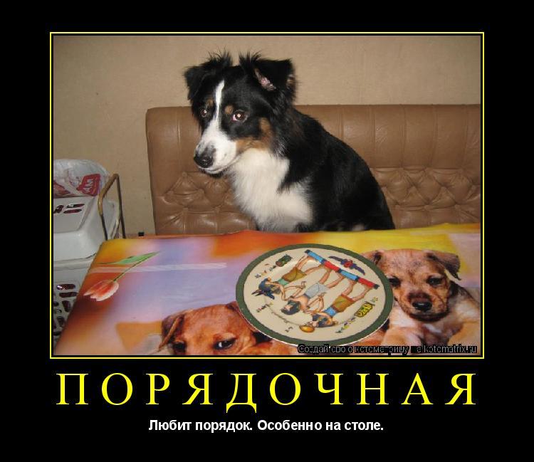 Котоматрица: порядочная Любит порядок. Особенно на столе.