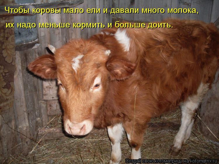 Котоматрица: Чтобы коровы мало ели и давали много молока,  их надо меньше кормить и больше доить.