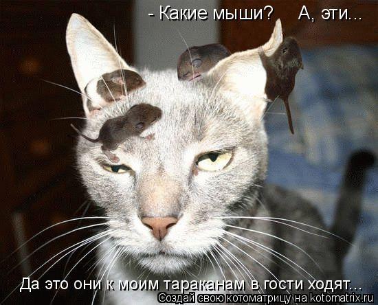 Котоматрица: - Какие мыши?     А, эти... Да это они к моим тараканам в гости ходят...