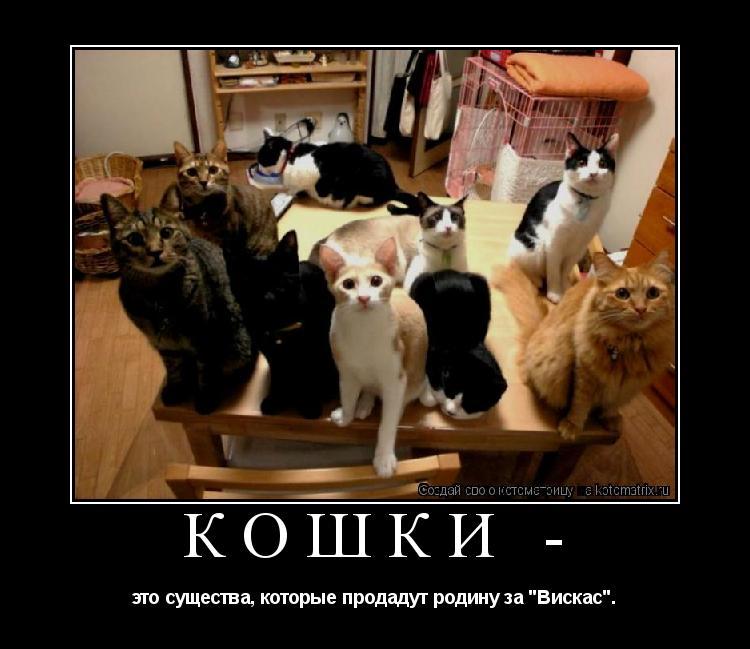 """Котоматрица: КОШКИ -  это существа, которые продадут родину за """"Вискас""""."""