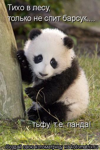 Котоматрица: Тихо в лесу,  только не спит барсук....  ... тьфу, т.е. панда!