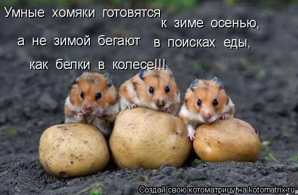 Котоматрица: Умные  хомяки  готовятся к  зиме  осенью,  а  не  зимой  бегают  в  поисках  еды, как  белки  в  колесе!!!