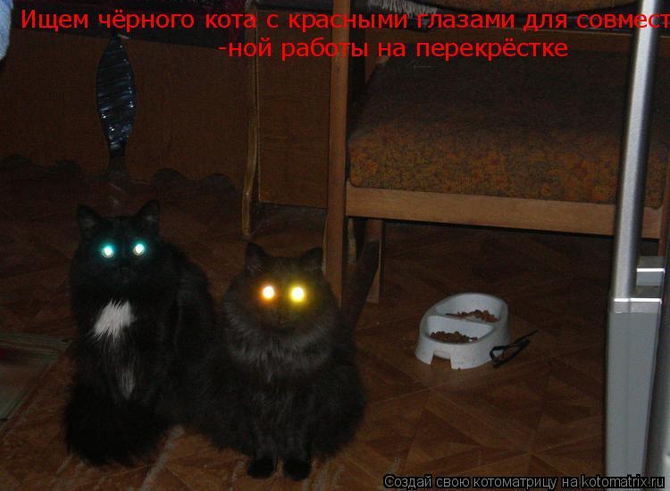 Котоматрица: Ищем чёрного кота с красными глазами для совместной работы на перекрёстке  -ной работы на перекрёстке