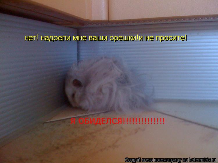 Котоматрица: нет! надоели мне ваши орешки!и не просите! Я ОБИДЕЛСЯ!!!!!!!!!!!!!!