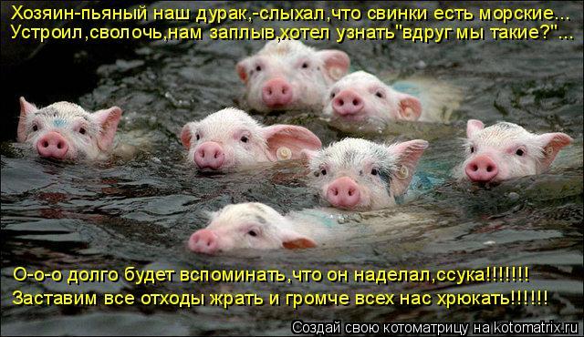 """Котоматрица: Хозяин-пьяный наш дурак,-слыхал,что свинки есть морские... Устроил,сволочь,нам заплыв,хотел узнать""""вдруг мы такие?""""... О-о-о долго будет вспоми"""