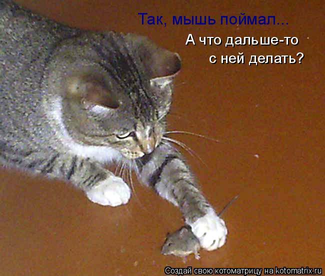 Котоматрица: Так, мышь поймал... А что дальше-то с ней делать?