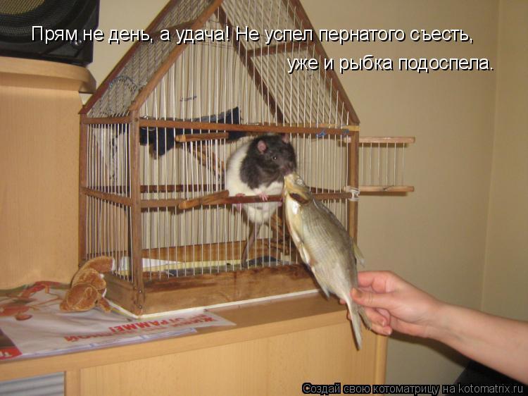 Котоматрица: Прям не день, а удача! Не успел пернатого съесть, уже и рыбка подоспела.