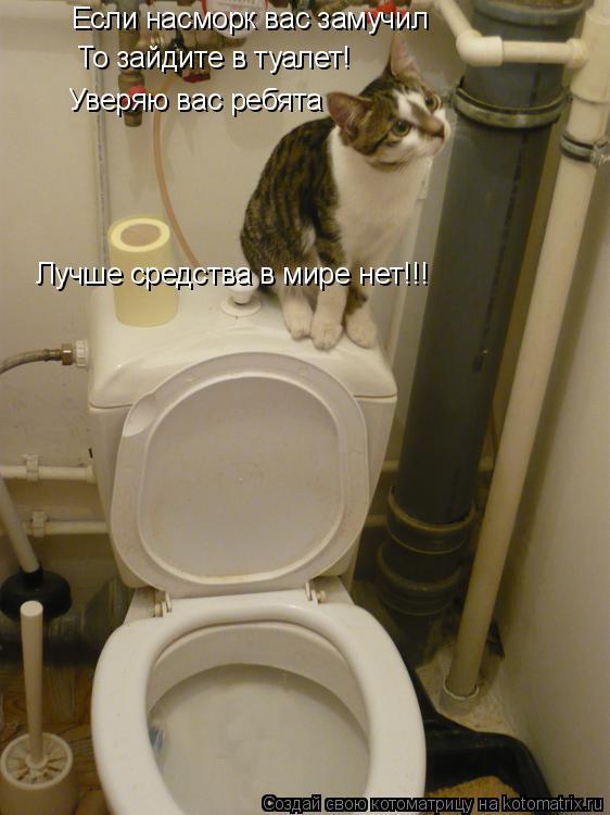 Котоматрица: Если насморк вас замучил То зайдите в туалет! Уверяю вас ребята Лучше средства в мире нет!!!