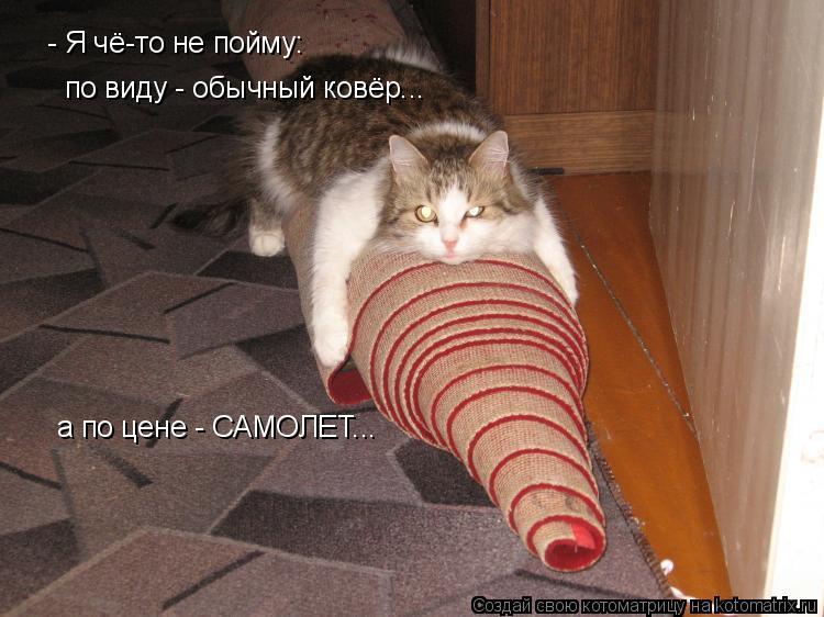 Котоматрица: - Я чё-то не пойму:  по виду - обычный ковёр... а по цене - САМОЛЕТ...