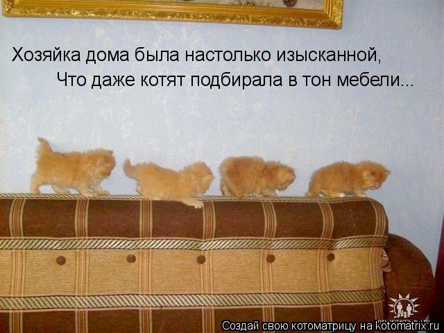 Котоматрица: Хозяйка дома была настолько изысканной, Что даже котят подбирала в тон мебели...