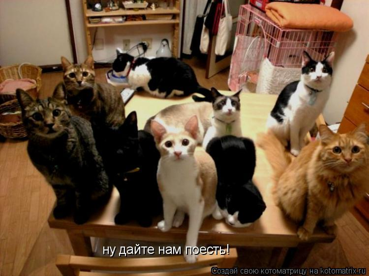 Котоматрица: ну дайте нам поесть!