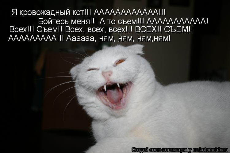 Котоматрица: Я кровожадный кот!!! АААААААААААА!!! Бойтесь меня!!! А то съем!!! ААААААААААА! Всех!!! Съем!! Всех, всех, всех!!! ВСЕХ!! СЪЕМ!! ААААААААА!!! Аааааа, н