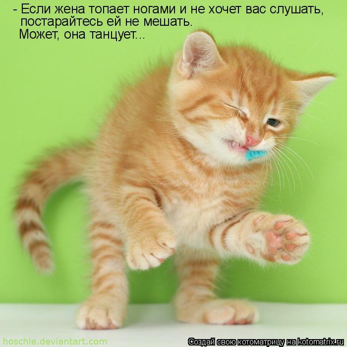 Котоматрица: - Если жена топает ногами и не хочет вас слушать, постарайтесь ей не мешать. Может, она танцует...