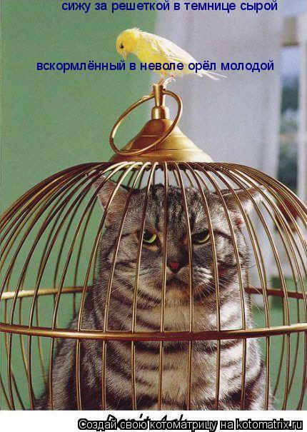 Котоматрица: сижу за решеткой в темнице сырой вскормлённый в неволе орёл молодой