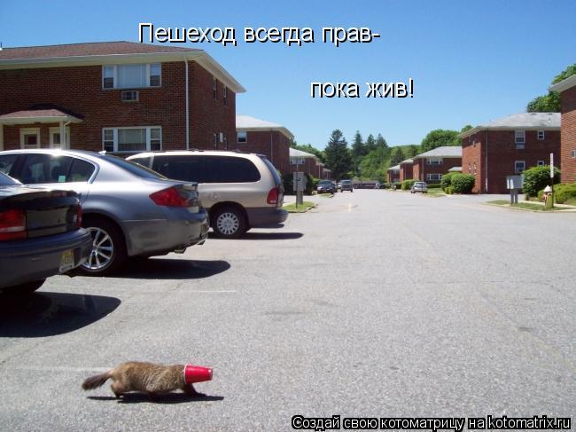 Котоматрица: Пешеход всегда прав- пока жив!
