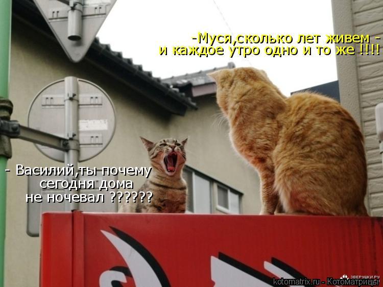 Котоматрица: -Муся,сколько лет живем -  и каждое утро одно и то же !!!! - Василий,ты почему   сегодня дома   не ночевал ??????