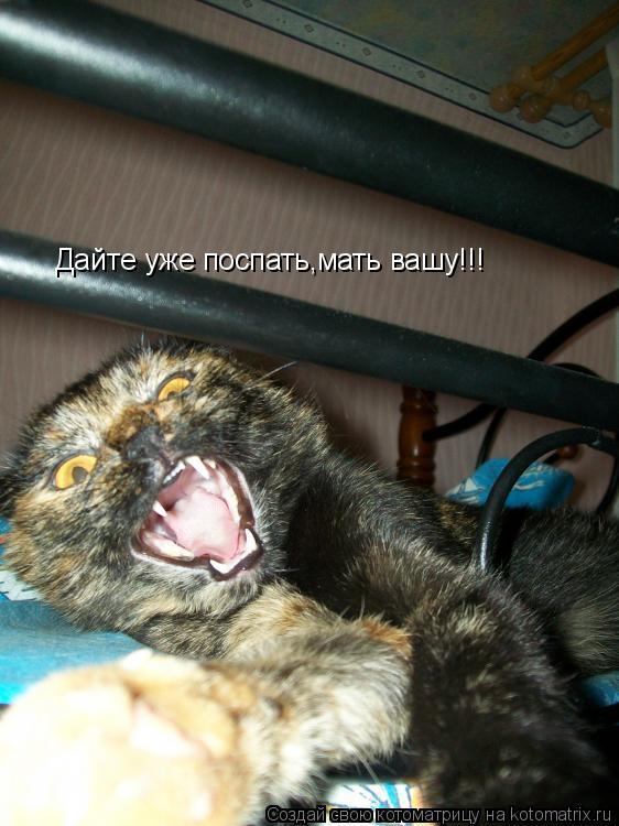 Котоматрица: Дайте уже поспать,мать вашу!!!