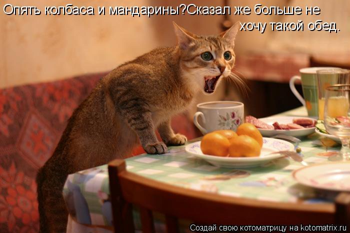 Котоматрица: Опять колбаса и мандарины?Сказал же больше не хочу такой обед.
