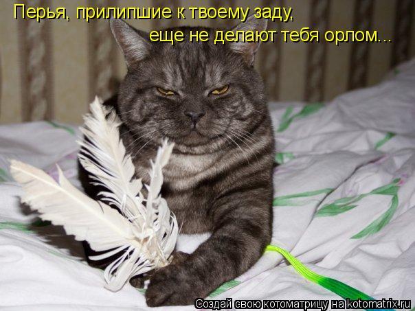 Котоматрица: Перья, прилипшие к твоему заду, еще не делают тебя орлом...